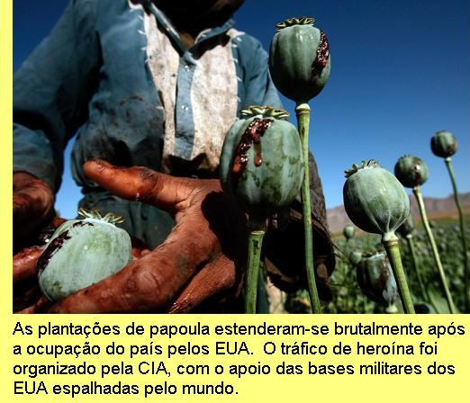Plantação de papoula no Afeganistão.
