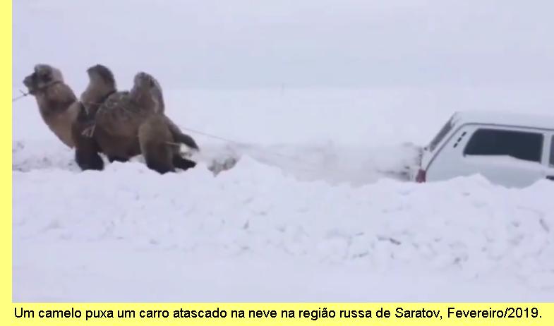 Um camelo puxa um carro atascado na neve em Saratov, Fevereiro/2019,